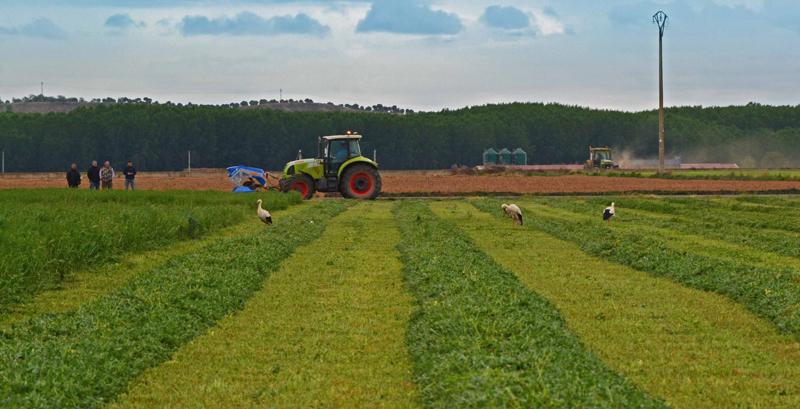 campo siega segadora frontal neva R8 tractor