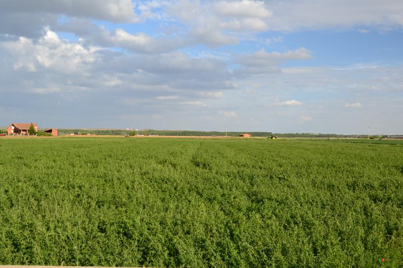 demostracion neva R8 campo alfalfa Zamora