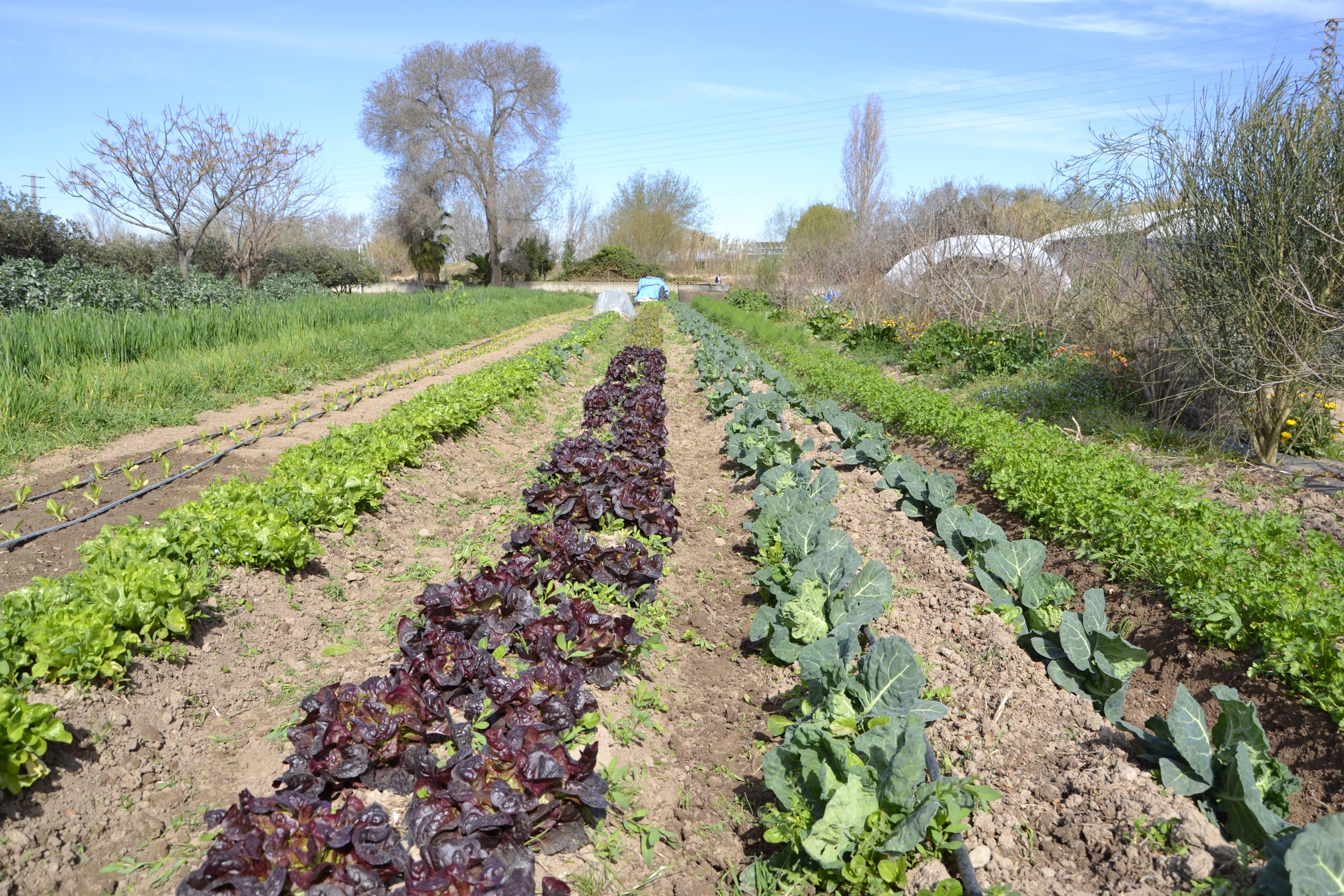 agricultura-ecologica-baix-llobregat