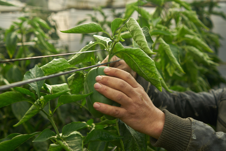 cultivo-ecologico-invernadero